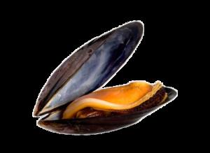 COZZE - MITILI Image