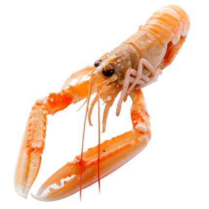 SCAMPI Image
